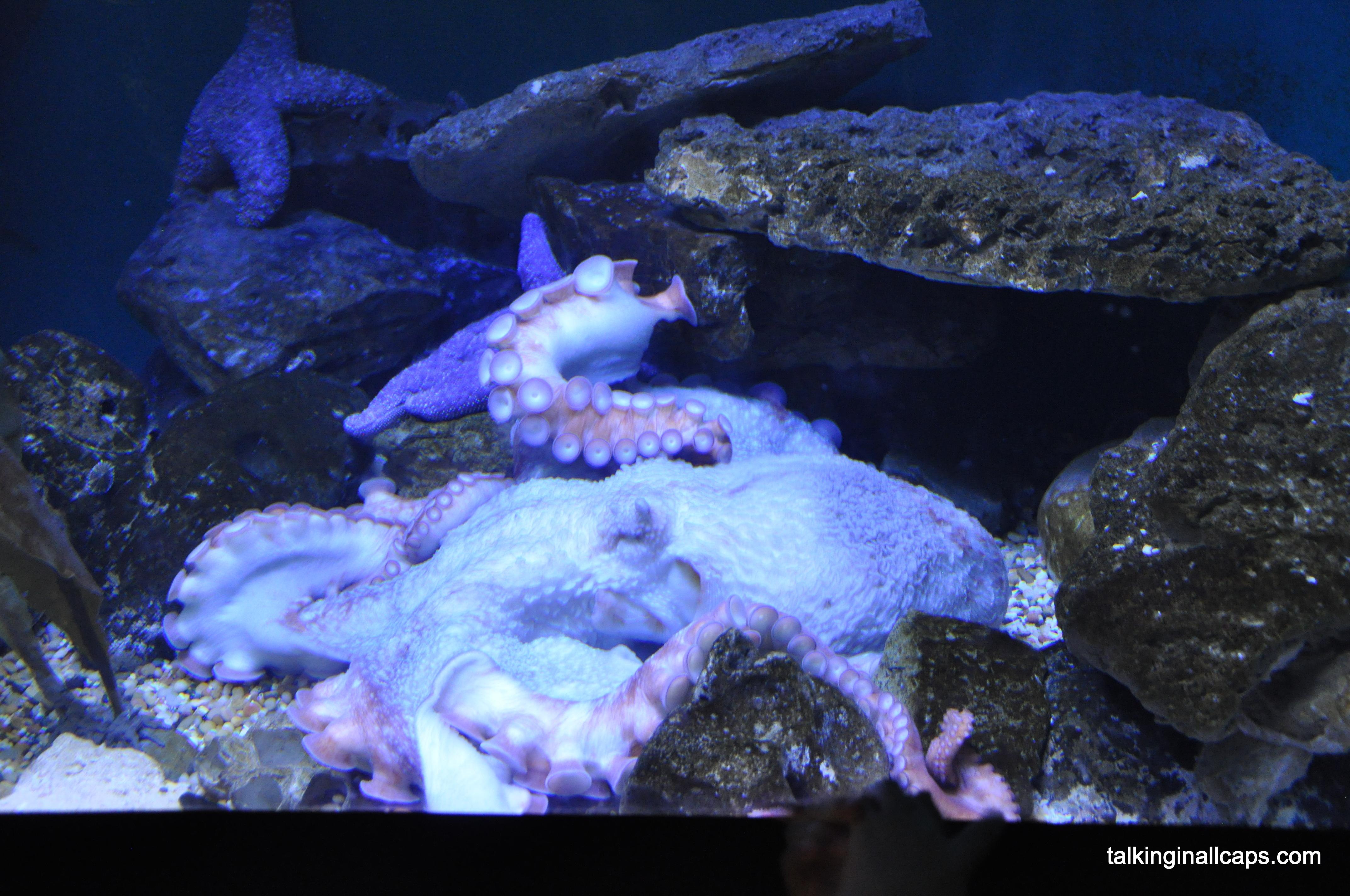 National aquarium talking in all caps for Aquarium washington dc