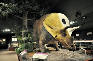 Museum of the Rockies - Bozeman MT - talkinginallcaps.com